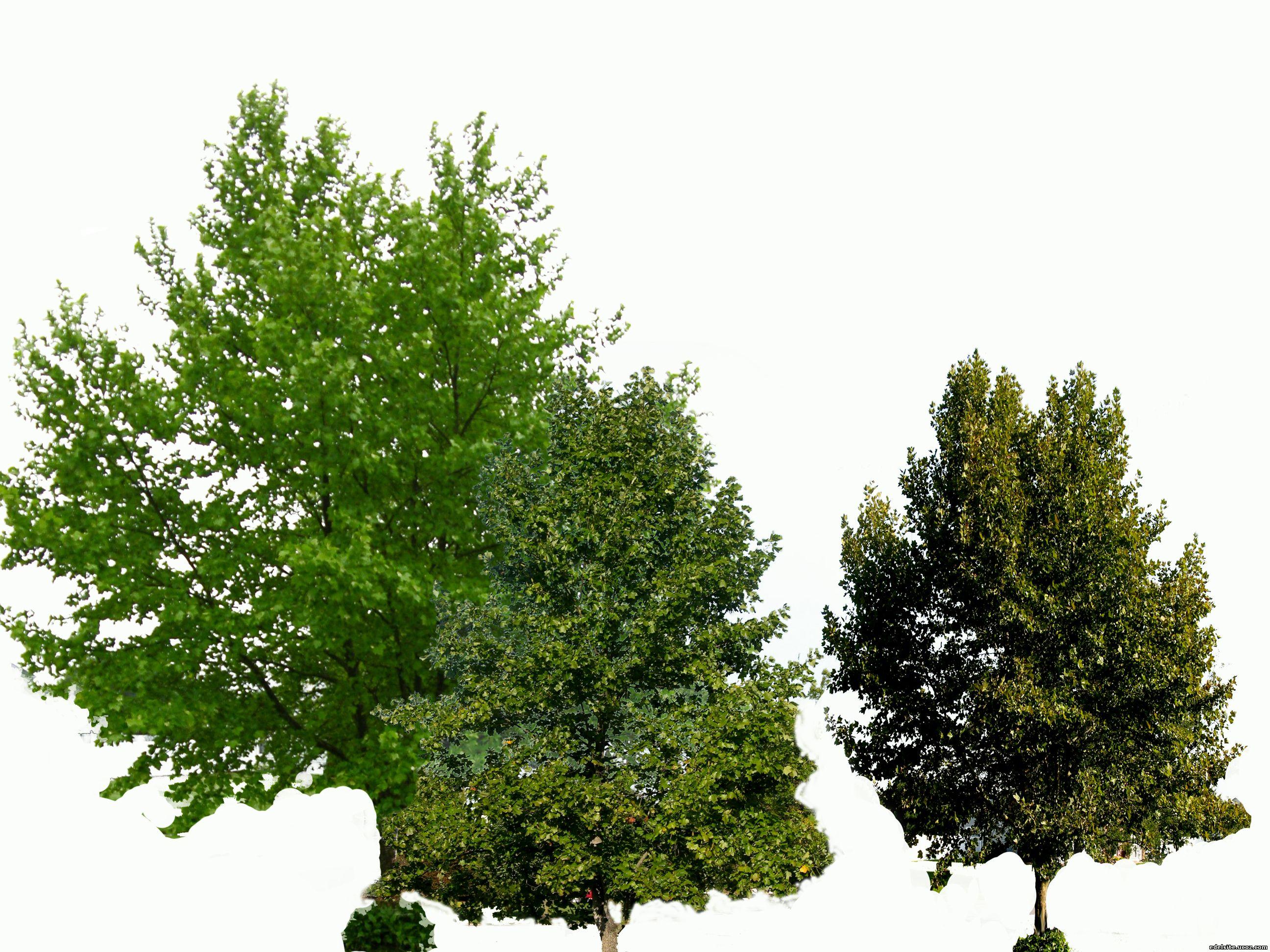 картинки деревья: